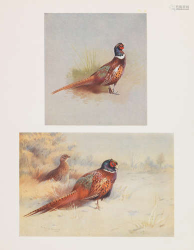 THORBURN (ARCHIBALD)  A Naturalist's Sketch Book, NUMBER 80 OF 105 LARGE PAPER COPIES, Longmans, Green, 1919
