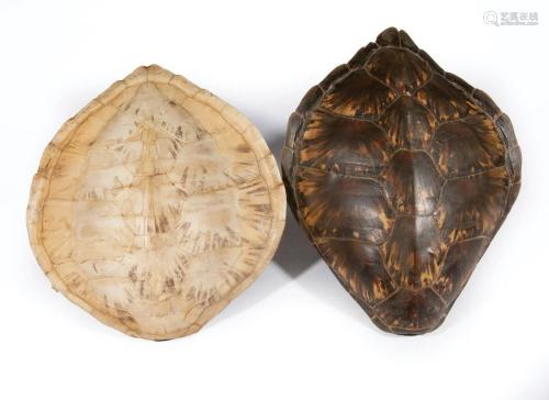 Two Decorative Tortoise Carapaces